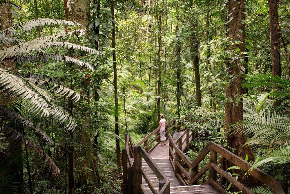 Daintree Rainforest at Noah Valley Cape Tribulation